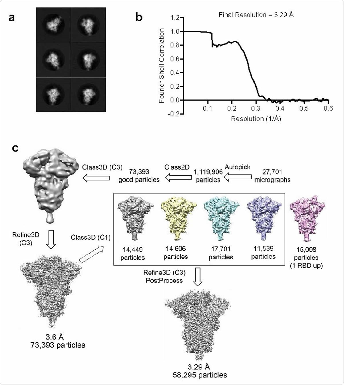Structure analysis of BNT162b2-encoded P2 S by cryo-electron microscopy a, 2D class averages of TwinStrep-tagged P2 S particles extracted from cryo-EM micrographs.. Box edge: 39.2 nm in each dimension. b, Fourier shell correlation curve from RELION gold-standard refinement of the P2 S trimer. c, Flowchart for cryo-EM data processing of the complex.