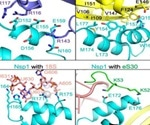 Research underlines SARS-CoV-2 N-terminal domain of Nsp1 as a potential drug target