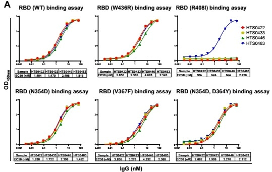 Cross-neutralization against SARS-CoV-2 RBD mutations by different antibodies. (A) The binding affinity of 4 positive antibodies from Bin2 to different SARS-CoV-2 RBD mutations. (B) The blocking ability of 4 positive antibodies from Bin2 to different SARS-CoV-2 RBD mutations.