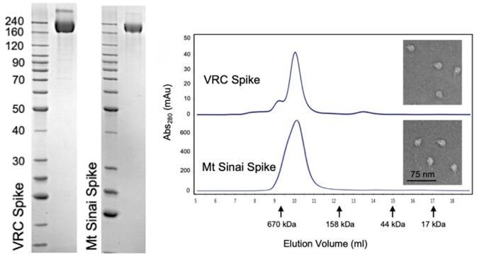 Verification of Spike trimer structure using SDS-PAGE, analytical size exclusion chromatography and transmission electron microscopy.