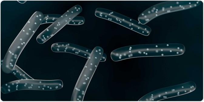 Probiotic Lactobacilli Bacteria