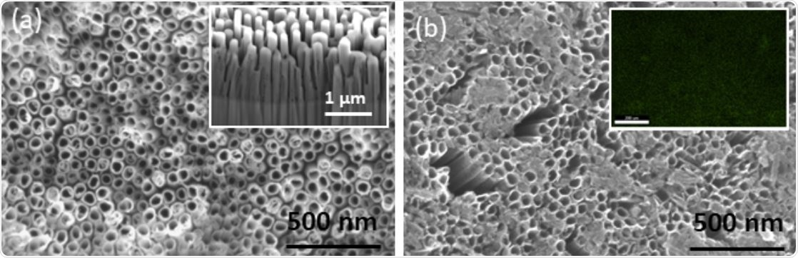 SEM micrographs of (a) TNTs post-annealing. Inset shows sidewalls of TNTs and (b) Co-functionalized TNTs showing the Co(OH)2 precipitate. Inset shows an EDS map of Co confirming its uniform distribution.