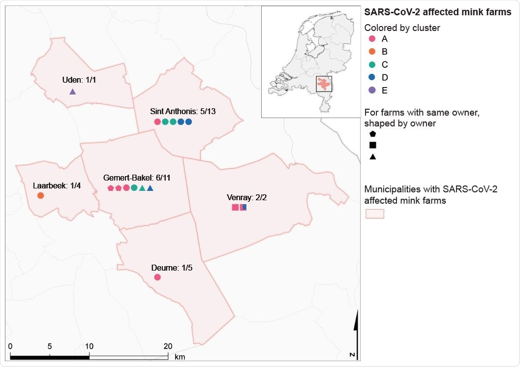 Geographical overview of SARS-CoV-2 positive mink farms per municipality affected. The proportion of SARS-CoV-2 positive mink farms over the total number of mink farms (CBS, 2019) is indicated. Symbols for positive farms are colored by cluster and shapes indicate farms with a same owner.