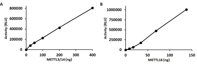 Activity of m6A methyltransferases METTL3-METTL14 (SignalChem Catalog No. M323-380G, A), and METTL16 (SignalChem Catalog No. M336-380G, B), as detected in Methyltransferase-GloTM assays