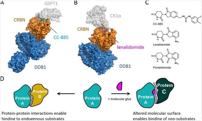 Molecular Glues