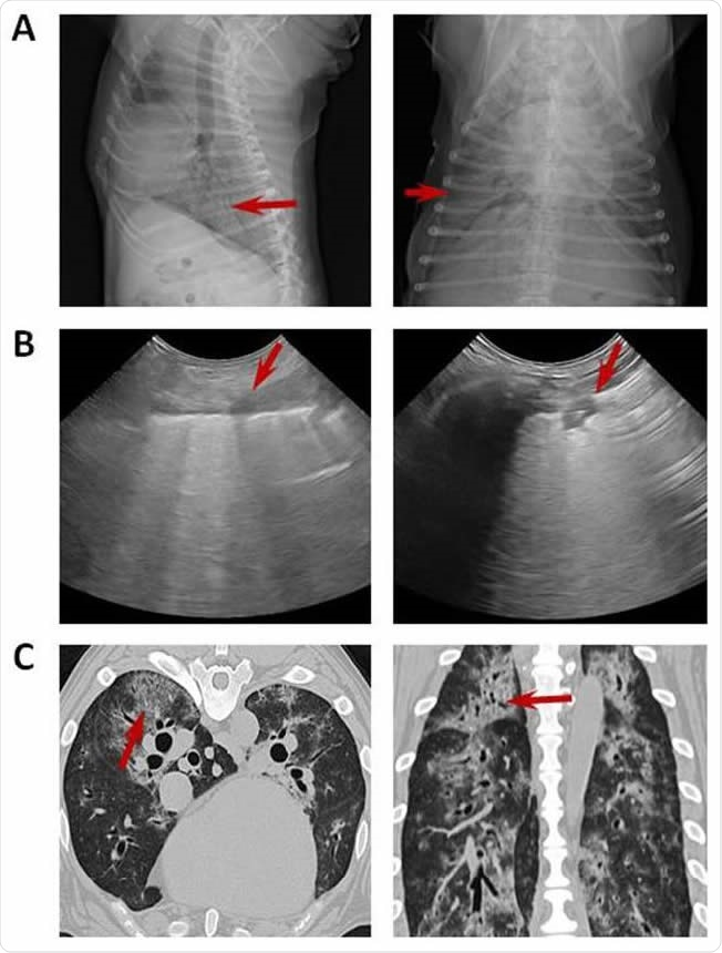 Imaging with chest radiograph, sonographic images and CT. (A) Thoracic radiograph made in right lateral (left) and dorsoventral (right) showing a generalized severe interstitial opacity accentuated in the caudodorsal (arrows). (B) Sonographic images of two patients with severe dyspnea showing a diffused B line (left; arrow) and consolidation focal lesions (right; arrow). (C) Transverse (left) chest CT images showing bilateral focal peripheral ground-glass opacities with intralobular and interlobular smooth septal thickening (arrow); sagital (right) chest CT images showing diffuse opacities with consolidation and bronchial wall thickening (arrow).