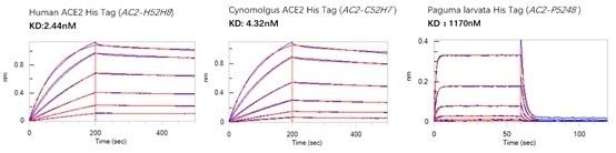 BLI binding activity results.