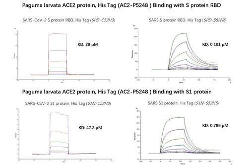 SPR binding activity results.