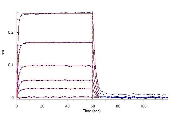 Loaded Human TIGIT, Fc Tag (Cat. No. TIT-H5254) on Protein A Biosensor, can bind Human CD155, His Tag (Cat. No. CD5-H5223) with an affinity constant of 0.98 μM as determined in BLI assay (ForteBio Octet Red96e).