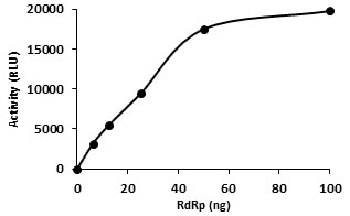 RNA polymerase activity of RdRp (SignalChem Catalog No. C19RP-G241H), as detected in a bioluminescence assay.