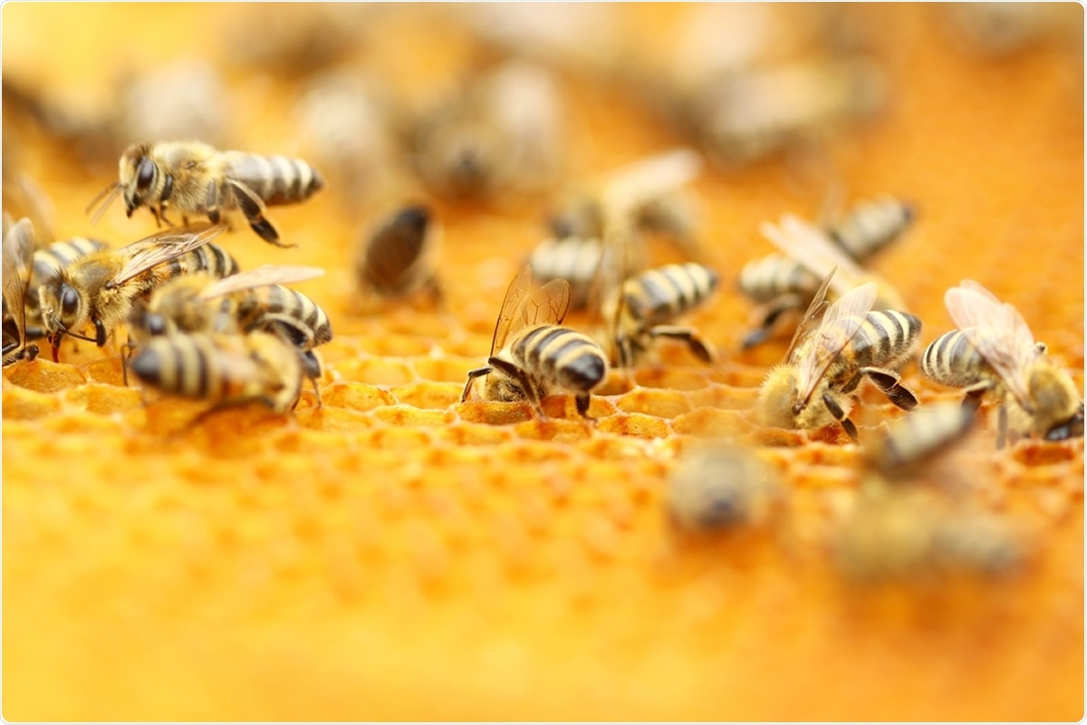 Study: Honeybee venom and melittin suppress growth factor receptor activation in HER2-enriched and triple-negative breast cancer. Image Credit: Simun Ascic / Shutterstock