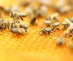 Honeybee venom induces cancer cell death in aggressive breast cancer