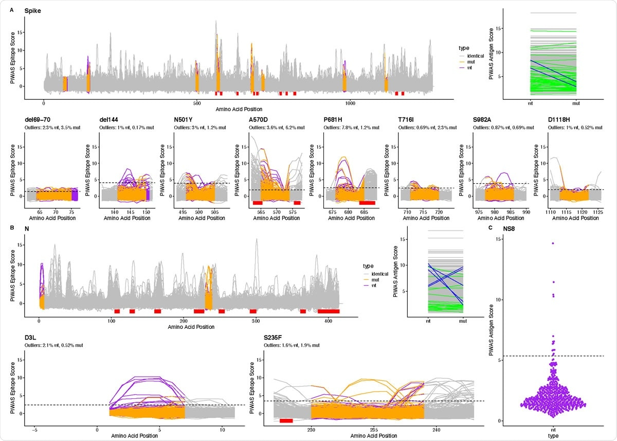 Linear epitope signal in COVID-19 patients for B.1.1.7 SARS-CoV-2. We used PIWAS analysis to examine linear epitope signal against B.1.1.7 SARS-CoV-2 in 579 COVID patients. For (A) spike glycoprotein and (B) nucleoprotein, we performed PIWAS tiling against both wild type (purple) and B.1.1.7 (orange) SARS-CoV-2. Regions outside of the variant region are tiled against the wild-type protein and are marked as identical (grey). Dominant SARSCoV- 2 epitopes identified in Haynes, Kamath, Bozekowski, et al4. are shown with red bars. PIWAS antigen score highlights individuals where the signal changed (green) or decreased by at least 3 (blue) as a result of the strain variants. For each epitope, we show the percentage of outliers (dashed line, PIWAS score > 99th percentile of the pre-pandemic control population) for the wild type and B.1.1.7 mutant. (C) We show non-structural protein 8 PIWAS antigen scores for the wild type SARS-CoV-2 strain relative to the 99th percentile in the pre-pandemic control population.