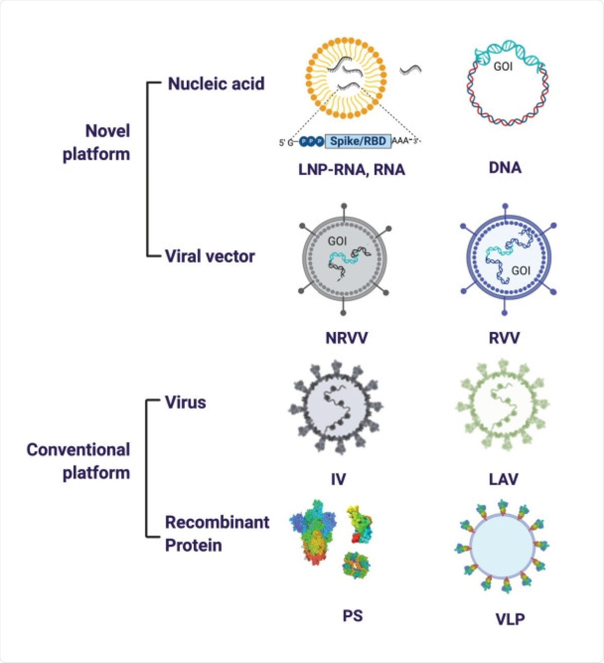 SARS-CoV-2 vaccine platforms. The major vaccine platforms that are being used in current SARS-CoV-2 vaccine candidates. A combination of conventional and novel vaccine platforms are being tested. Conventional vaccine platforms that have been licensed for human use are the inactivated virus (IV), live attenuated virus (LAV), and recombinant protein-based (Protein Subunit (PS)). Novel vaccine platforms include nucleic acid based (DNA and RNA encoding the gene of interest (GOI)) and viral vector-based (non-replicating viral vector (NRVV) and replicating viral vector (RVV).
