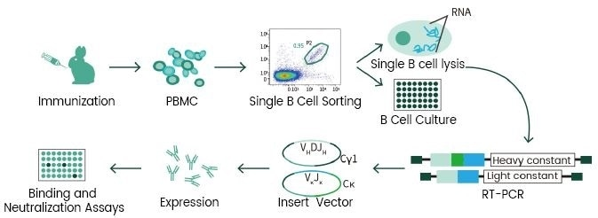 Single B cell technology.