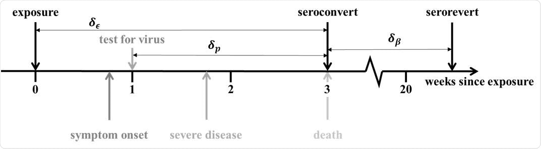 Progression of exposed individuals through the various clinical (below the timeline), and diagnostic (above the timeline) stages of infection and recovery. Stages marked in grey represent events that may happen, with a probability consistent with the darkness of the shade of grey.