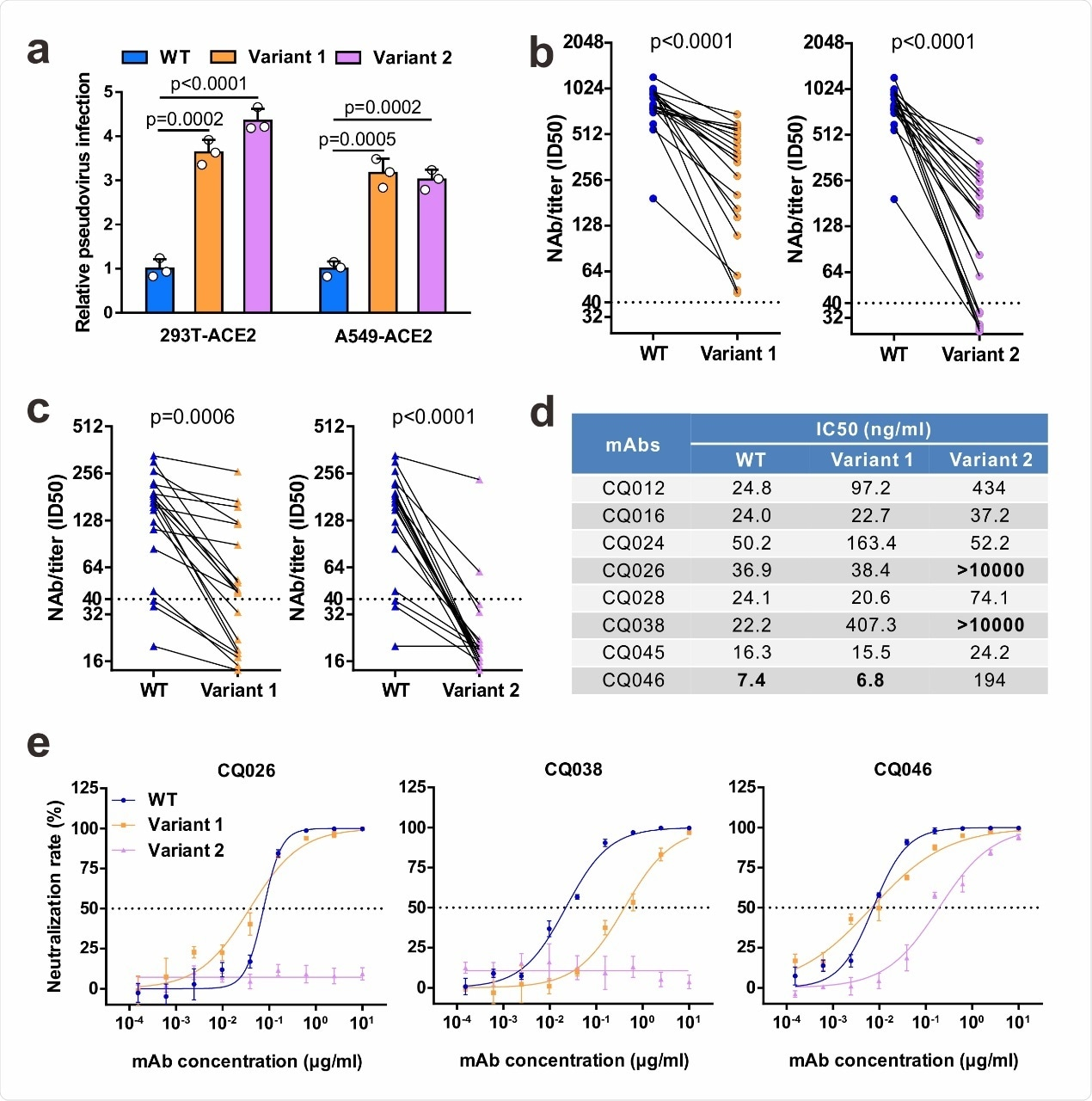 Neutralizing activities of convalescent sera and monoclonal antibodies against SARS-CoV-2 variants. a Infectivity of WT and variant pseudovirus conducted in 293T-ACE2 and A549-ACE2 cells. Cells were inoculated with equivalent doses of each pseudotyped virus. WT, wild-type Spike (GenBank: 213 QHD43416) pesudotyped virus; Variant 1, N501Y.V1 mutant Spike pesudotyped virus (containing H60/V70 deletion, Y144 deletion, N501Y, 215 A570D, D614G, P681H, T716I, S982A, D1118H); Variant 2, N501Y.V2 mutant Spike pesudotyped virus (containing K417N, E484K, N501Y, D614G). b-c Neutralization of WT and variant pesueoviruses by convalescent sera. Pseudovirus-based neutralizing assay were performed to detect neutralizing antibody (NAb) titers against SARS-CoV-2. The thresholds of detection were 1:40 of ID50. Twenty sera (indicated by circles) were drawn 5 to 33 days post-symptom onset (b); 20 sera (indicated by triangles) were drawn ~ 8 months post-symptom onset (c). d-e The half-maximal inhibitory concentrations (IC50) for tested monoclonal antibodies (mAbs) against pseudoviruses (d) and representative neutralization curves (e). Statistical significance was determined by One-way ANOVA.