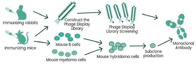 Phage library technology & hybridoma technology.