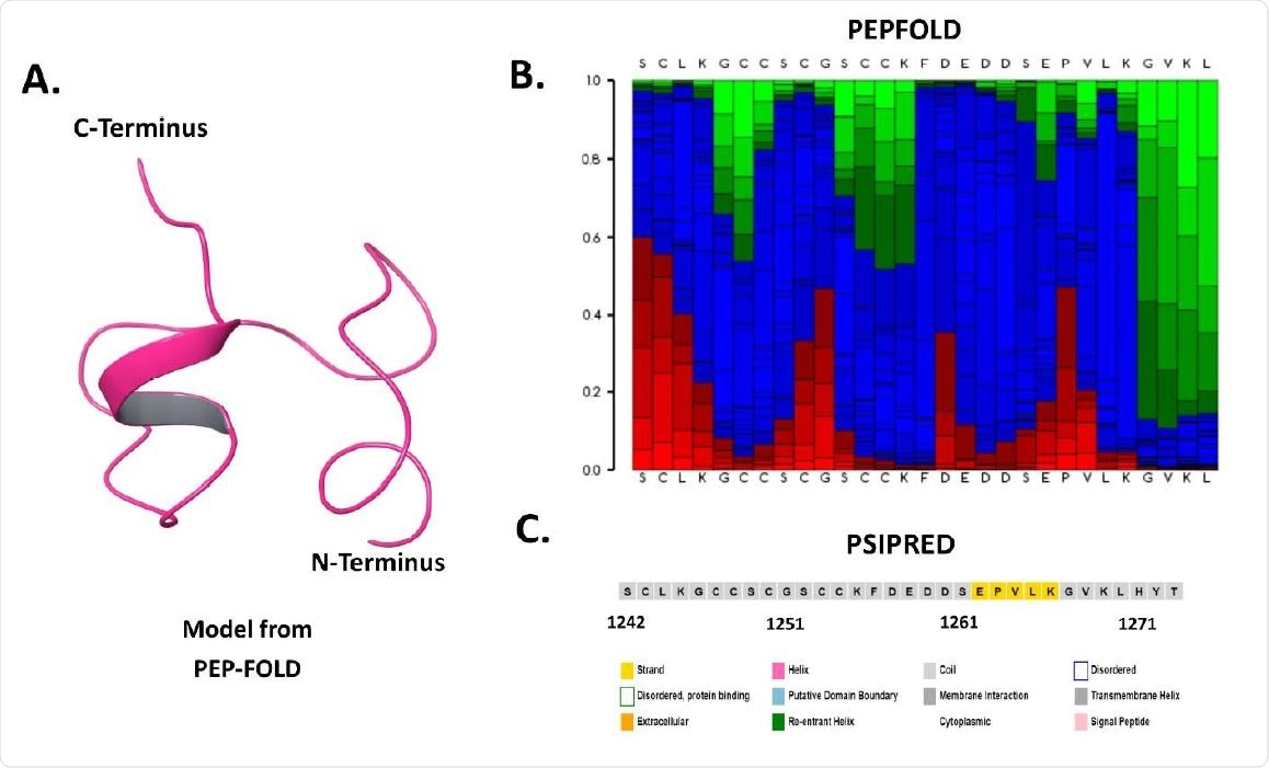 Sequence and structure-based analysis of spike C-terminal cytoplasmic domain (1242-1273 residues): A. Modeled structure through PEP-FOLD web server, B. Secondary structure analysis using PSIPRED web server, and C. PEP-FOLD structure analysis depicting helix (red), coil (blue), and extended (green).