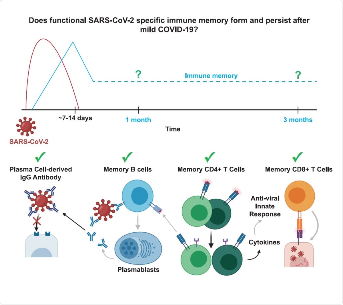 Study: Functional SARS-CoV-2-Specific Immune Memory Persists after Mild COVID-19. Image Credit: Graphical Abstract / Cell Journal
