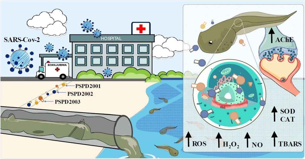Study: An insight into neurotoxic and toxicity of spike fragments SARS-CoV-2 by exposure environment: A threat to aquatic health? Image Credit: Graphical Abstract / Original Article