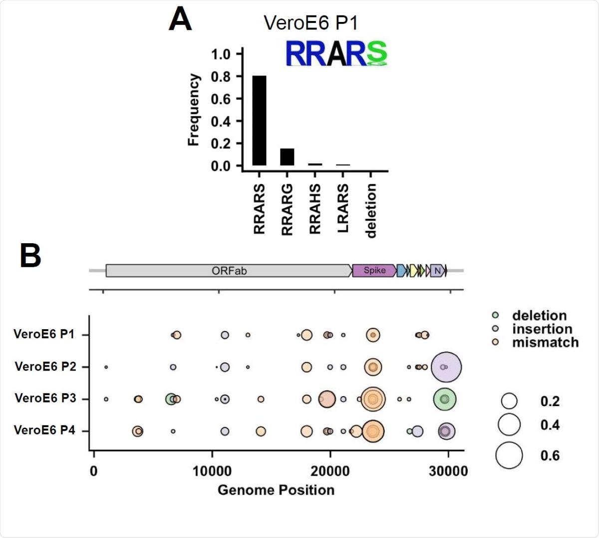 Análisis de secuenciación profunda del sitio de escisión multibásico del virus del paso 1 de VeroE6 y análisis de secuenciación profunda del genoma completo de los virus del paso 1-4.  (A) Análisis de secuenciación profunda del stock de virus del paso 1 de VeroE6.  En cada gráfico se muestra el logotipo de la secuencia de aminoácidos del sitio de escisión multibásico.  (B) Análisis de secuenciación profunda del genoma completo de virus VeroE6 pasaje 1, 2, 3 y pasaje 4.