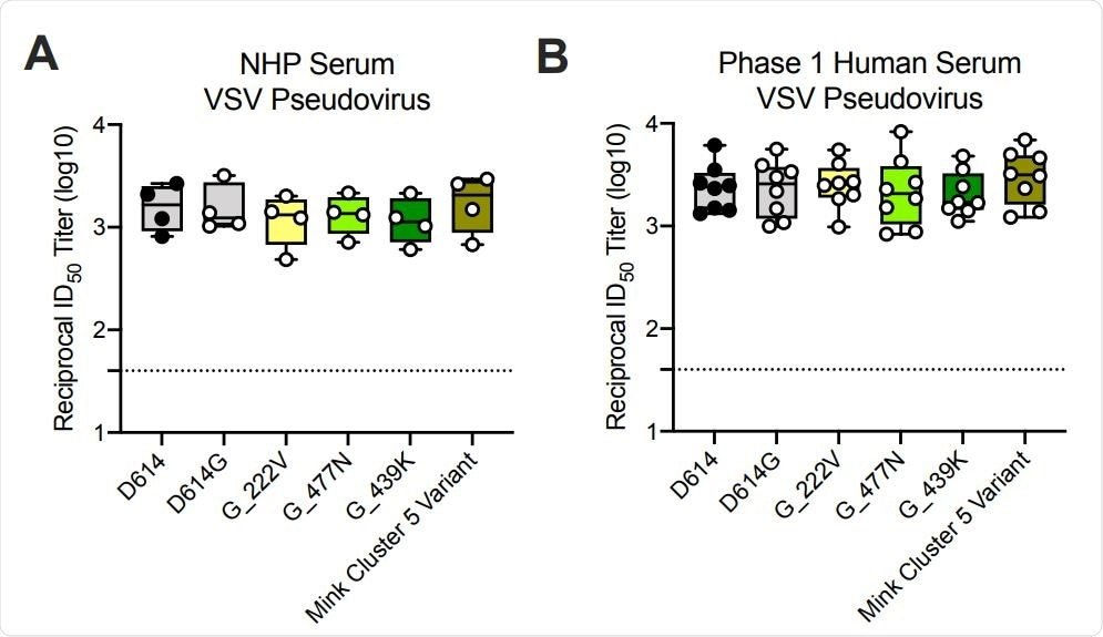 Ability of mRNA-1273 immune sera from NHPs and humans to neutralize SARSCoV-2 pseudoviruses representing early variants. (A) Rhesus macaques (NHPs) were immunized with 30 µg mRNA-1273 on a prime-boost schedule, and sera were collected 4 weeks post-boost. (B) Phase 1 trial participants were immunized with 100 µg mRNA-1273 on a primeboost schedule, and sera were collected 1 week post-boost. Neutralization was measured by a recombinant VSV-based SARS-CoV-2 pseudovirus neutralization assay incorporating full-length spike protein of the Wuhan isolate (D614) or the indicated spike variants (D614G, A222V-D614G, S477N-D614G, N439K-D614G, mink cluster 5 variant). Min to max box plots, with the box from 25-75% and the median value denoted by the line. The horizonal dotted lines indicate the lower limit of quantification (LLOQ=40).