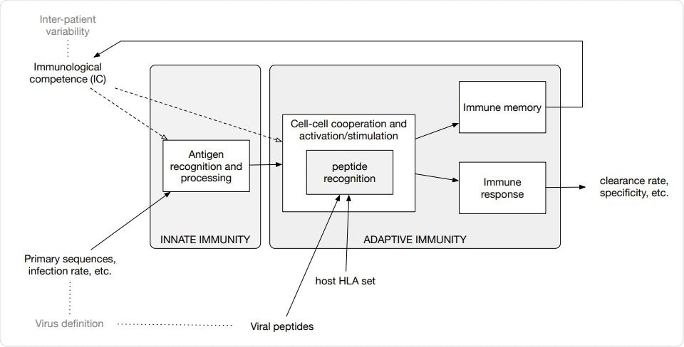 Diagram of the in-silico model components and accepted input. The model embodies functions to calculate the clonal affinity to precomputed viral peptides of the selected pathogen (defined by its primary sequence) with respect to a specific HLA set. The population-dynamics of the elicited lymphocytes clones, resulting from the infection by the SARS-CoV-2, provides a varying degree of efficiency of the immune response which, as it turns out, correlates with the parameters defining both the immunological competence (IC) of the virtual host and the virus definition.