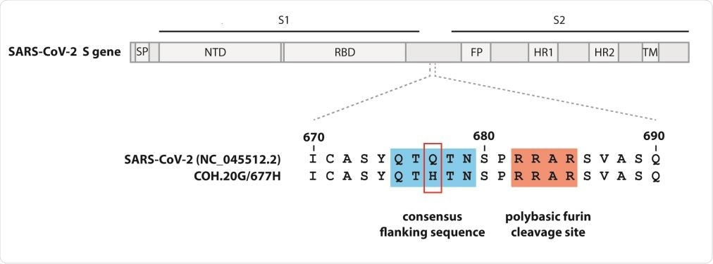 Site of the Q677H mutation in Spike gene in the QTQTN motif conservation/furin cleavage site. Signal peptide (SP), N‐terminal domain (NTD), receptor‐binding domain (RBD), fusion peptide (FP), heptad repeat 1 (HR1), heptad repeat 2 (HR2), and transmembrane domain (TM).