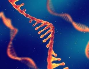 mRNA Therapeutics – Analytical and Bioanalytical Characterization