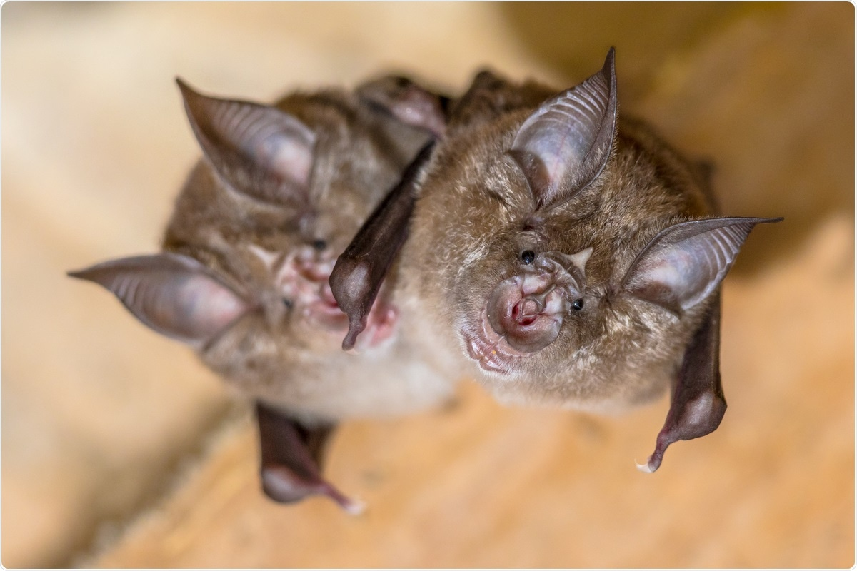 Study: A novel SARS-CoV-2 related coronavirus in bats from Cambodia. Image Credit: Rudmer Zwerver / Shutterstock