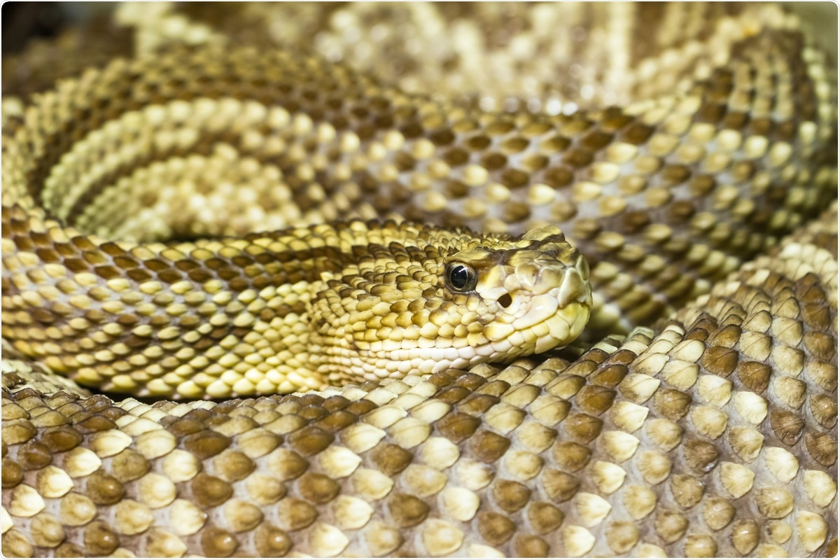 Study: Snake venom phospholipases A2 possess a strong virucidal activity against SARS-CoV-2 in vitro and block the cell fusion mediated by spike glycoprotein interaction with the ACE2 receptor. Image Credit: Dmitri Gomon / Shutterstock