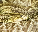 A snake venom enzyme shows anti-SARS-CoV-2 activity in vitro