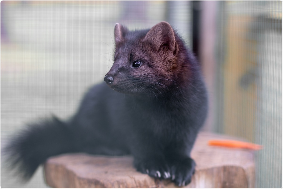 Study: Occupational and environmental exposure to SARS-CoV-2 in and around infected mink farms. Image Credit: ANATOLY Foto / Shutterstock