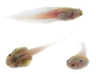 Study suggests SARS-CoV-2 could affect aquatic wildlife