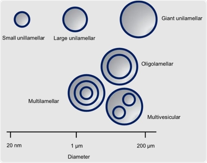 Characterizing liposomes in pharmaceutical applications with Small-Angle X-ray Scattering (SAXS)