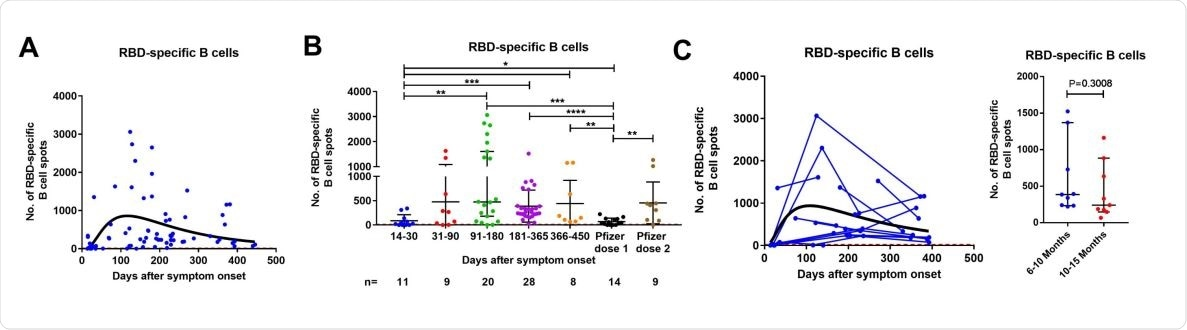Cross-sectional analysis of SARS-CoV-2-specific memory T cell responses in COVID-19 patients in relation to disease severity. Dynamics of S1 (A-C) and S N M O (D-F) peptide pools-specific memory IL-2, IFN-γ, and IL2/IFN-γ-producing T cells in samples from COVID-19 patients with mild/moderate (A) and severe/critical (B) symptoms with the corresponding second order polynomial (mild/moderate) or log-normal (severe/critical) fitting curve (in black). The results were expressed as the number of spots per 300,000 seeded cells after subtracting the background spots of the negative control. Symbols represent individual subjects. The cutoff value (dashed red line) was set at the highest number of specific T cell spots for the negative controls (> 6 to 13 spots / 300 000 seeded cells depending on the T cell population). Mann-Whitney U test.