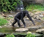 Are non-human primates at risk of SARS-CoV-2 exposure through wastewater contact?