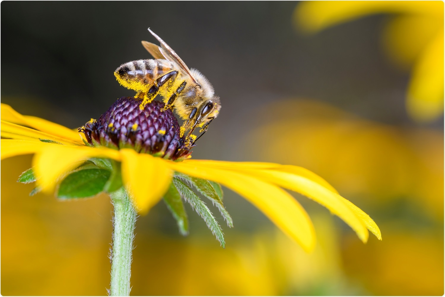 Honeybees can be trained to identify SARS-CoV-2 infected samples, say scientists