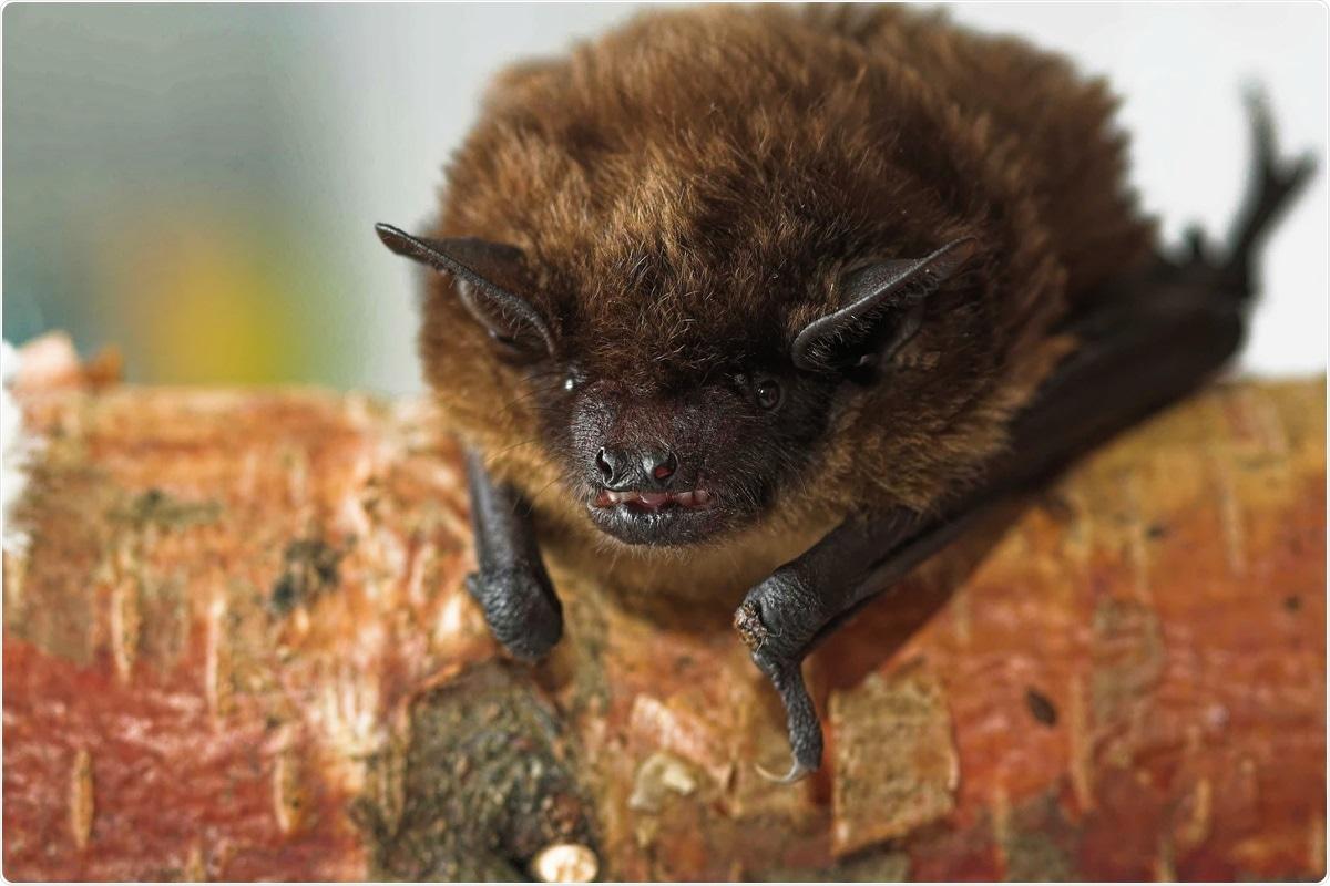 Study: Genomic Characterization of a Novel Alphacoronavirus Isolated from Bats, Korea, 2020. Image Credit: Colin Seddon/ Shutterstock