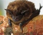 Genetic characteristics of possible new Alphacoronavirus species found in Bats