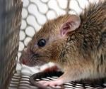 Study reveals the zoonotic potential of the rat Sialodacryoadenitis virus