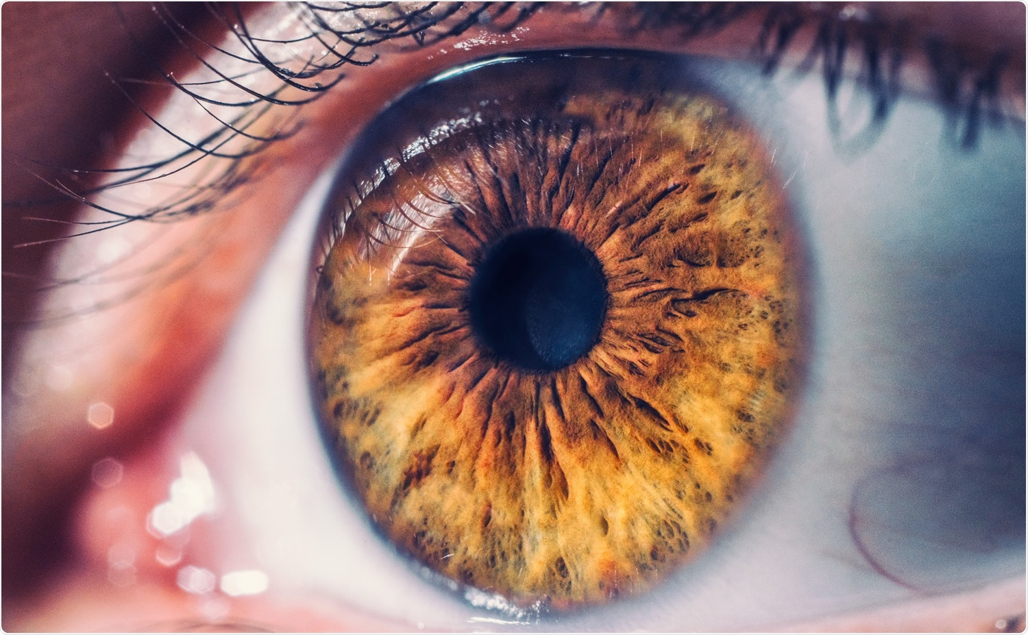 Study: SARS-CoV-2 infects and replicates in photoreceptor and retinal ganglion cells of human retinal organoids. Image Credit: hispan / Shutterstock