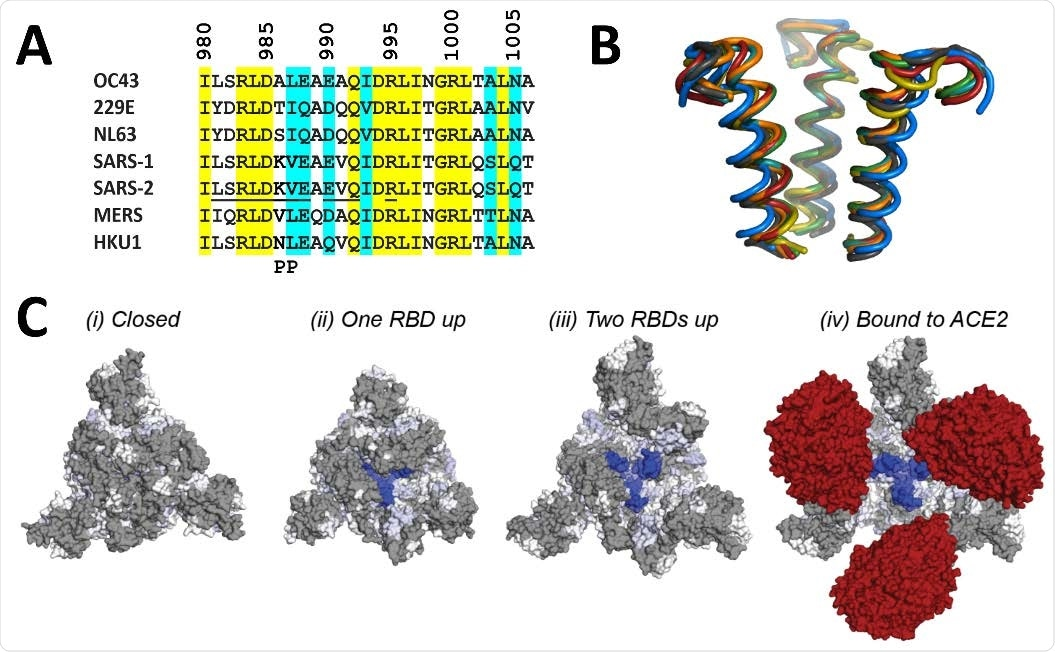Structural location of 3A3 epitope and implications for antibody binding. The 3A3 epitope identified by HDX mass spectrometry (SARS-2 amino acids 980-1006) is highly conserved across the spike (A) sequences and (B) structures of coronaviruses known to infect humans. In (A), identical residues are highlighted in yellow and similar residues are highlighted in aqua. Solvent exposed residues visible in spike structures with at least one RBD-up are underlined in the SARS-2 sequence. The location of the two proline mutations introduced to 2P variants are shown below the alignment. In (B), the structure of each epitope is displayed as follows: SARS-2 (6VSB) – red, SARS-1 (6CRV, RMSD = 0.8 Å) – orange, MERS (5X5C, RMSD = 3.1 Å) – blue, NL63 (7KIP, RMSD = 2.6 Å) – grey, HKU1 (5I08, RMSD = 0.5 Å) – teal, OC43 (6OHW, RMSD = 0.6 Å) – green, 229E (6U7H, RMSD = 2.0 Å) – yellow. (C) Trimeric SARS-2 spike in various conformations colored according to the difference in deuterium fractional uptake between SARS-2 HexaPro spike alone and with 3A3 IgG (as in Figure 4D). The 3A3 epitope (dark blue) within S2 is completely hidden by S1 in the structure of wild-type SARS-2 spike in the (i) three RBDs down or closed conformation (PDB: 6XR8). In structures of stabilized spike with (ii) one RBD-up (PDB: 6VSB), (iii) two RBDs up (PDB: 7A93), or (iv) three RBDs up and bound to ACE2 (red) (PDB: 7A98), the 3A3 epitope is increasingly accessible. Residues lacking coverage in the HDX experiment are indicated in grey. The side view is shown in fig. S10C.