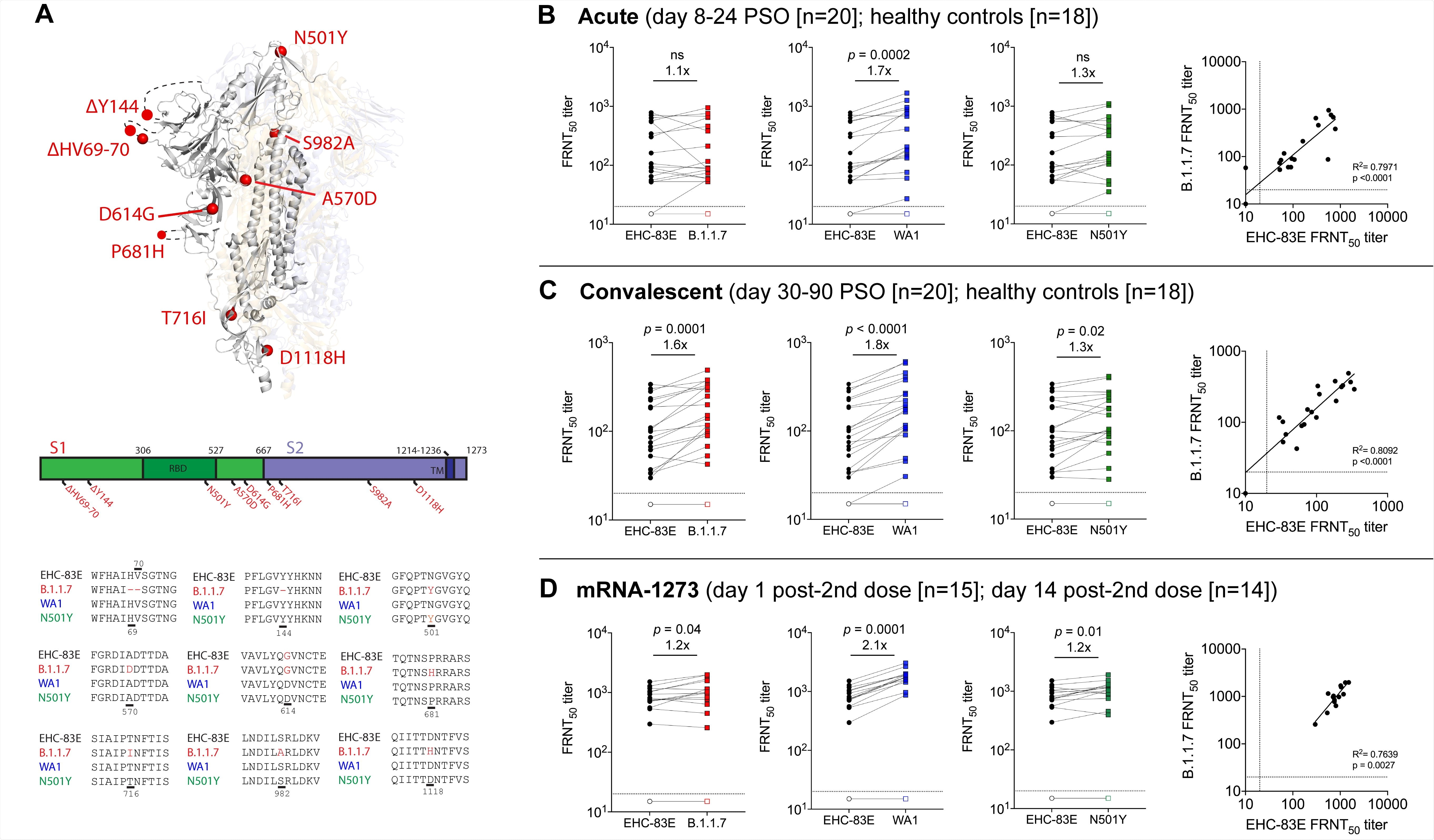 Respuestas de anticuerpos neutralizantes frente a la variante viral SARS-CoV-2 B.1.1.7.  Se muestran datos de las siguientes cohortes basadas en la infección natural: 20 pacientes COVID-19 con infección aguda (8-24 días PSO; símbolos cerrados), 20 individuos convalecientes COVID-19 (30-90 días PSO, símbolos cerrados) 18 controles sanos ( símbolos abiertos);  e individuos que recibieron 100 ug de ARNm-1273 (de 18 a 55 años) el día 1 después de la segunda dosis (15 participantes; símbolos abiertos) y el día 15 después de la segunda dosis (14 participantes; símbolos cerrados).  Se muestra un esquema de los cambios de aminoácidos dentro de la proteína de pico entre las variantes de SARS-CoV-2 (Panel A);  El título inhibidor del 50% (FRNT50) en el ensayo de neutralización por reducción de enfoque (FRNT) para las variantes EHC-83E (negro), B.1.1.7 (rojo), WA1 (azul) y N501Y (verde) del SARS-CoV-2 y se muestran gráficos de correlación entre los virus EHC-83E y B.1.1.7 para los pacientes con infección aguda de COVID-19 (Panel B), individuos convalecientes con COVID-19 (Panel C) e individuos vacunados con ARNm-1273 (Panel D).  La significación estadística se determinó utilizando una prueba t pareada de Wilcoxon.  En cada uno de los gráficos se muestra el cambio de veces de GMT para los respectivos aislamientos en relación con EHC-83E.