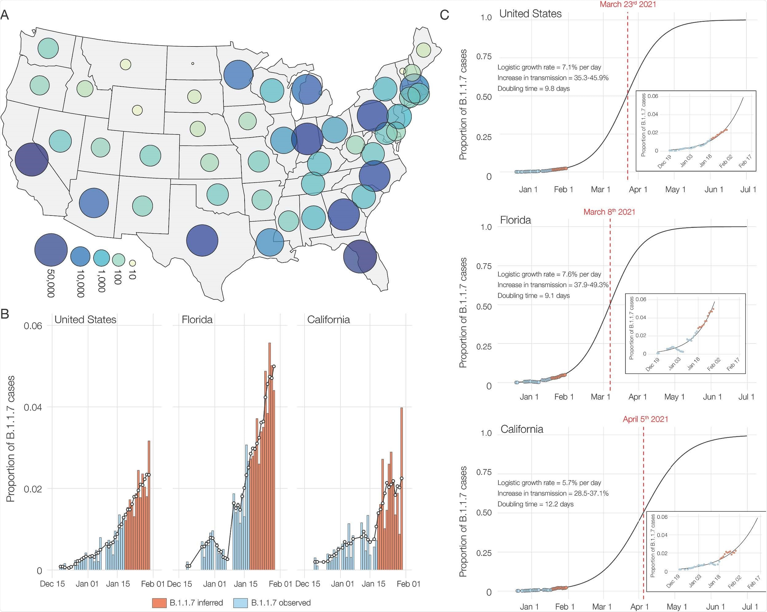 SGTF and B.1.1.7 in SARS-CoV-2 tests at Helix since December 15, 2020. (A) Map of contiguous states in the USA with each bubble representing the number of positive tests from each state. (B) Estimated proportion of B.1.1.7 in total number of positive tests with Cq(N gene) < 27, in the U.S., California and Florida from December 15th, 2020 to January 30th, 2021. The proportion of B.1.1.7 samples was estimated using: (Observed B.1.1.7 sequences/Sequenced SGTF samples) * (Positive tests with SGTF/Total positive tests). Due to the lag in sequencing, the average proportion of B.1.1.7 sequences in sequenced samples with SGTF from the last five days (January 13-18) was used to infer the proportion of B.1.1.7 cases in total positive tests for the January 19-30 time period between. The black line shows the 5-day rolling average of the estimated proportion of B.1.1.7 in total positives. (C) Logistic growth curves fit to the rolling average of the estimated proportion of B.1.1.7 in total positives for the U.S., Florida and California. The predicted time when the estimated proportion of B.1.1.7 cases crosses 0.5 is indicated in red.