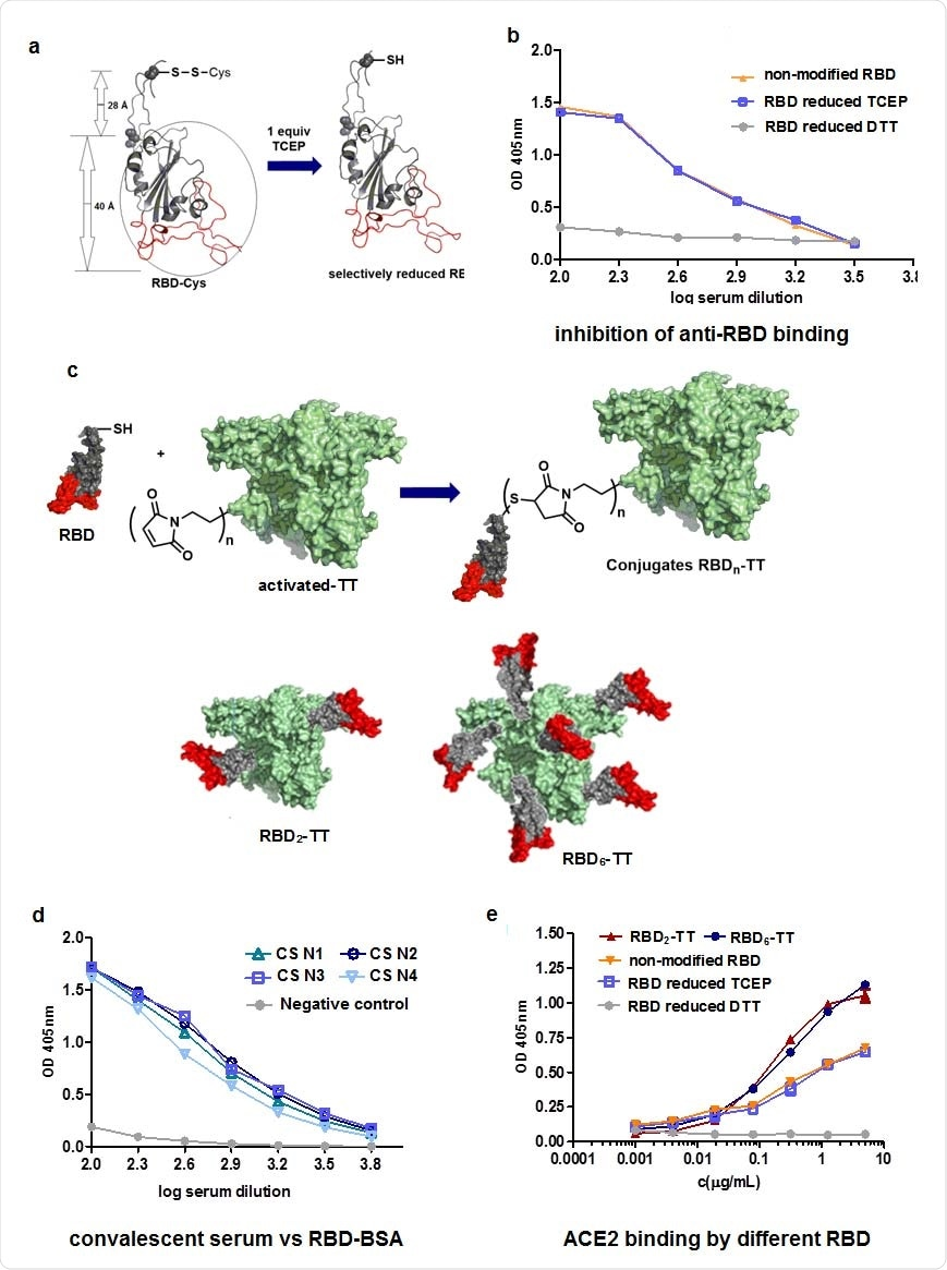 Synthesis of RBD-TT conjugates. a. Reduction by use of TCEP b. Inhibition of anti- RBD binding by reduced RBD, using CS. c. Conjugation of RBD with TT and representation of RBD2-TT and RBD6-TT. d. Recognition of RBD-BSA conjugates by convalescent serum (CS),