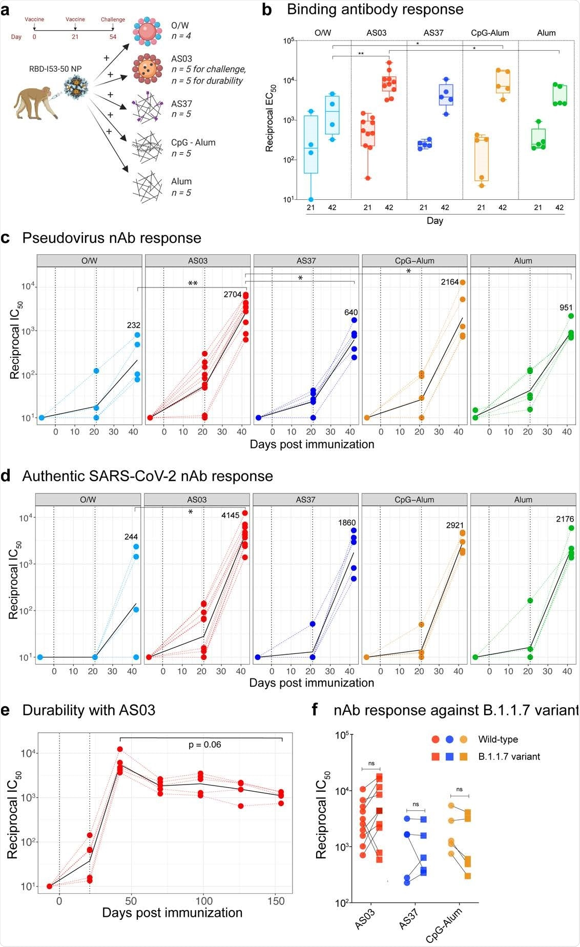 SARS-CoV-2 RBD-NP immunization induces robust antibody responses a, Schematic representation of the study design. b, SARS-CoV-2 S-specific IgG titers (plotted as reciprocal EC50) in sera collected at days 21 and 42 measured by ELISA. The box shows median and 25th and 75th percentiles and the error bars show the range. c - d, Serum nAb titers (plotted as reciprocal IC50) determined using a SARS-CoV-2 S pseudovirus (c) and authentic SARS-CoV-2 (d) entry assay at day -7, 21 and 42. In c and d, the black line represents the geometric mean of all data points. The numbers represent geometric mean titers on day 42. Asterisks represent the statistically significant differences between two groups analyzed by two-sided Mann-Whitney rank-sum test (* p < 0.05, ** p < 0.01). e, SARS-CoV-2 S-specific nAb titers against authentic SARS-CoV-2 virus measured at time points indicated on X-axis. Statistical difference between the time points was analyzed by two-sided Wilcoxon matched-pairs signed-rank. f, Serum nAb titers against the wild-type (circles) or the B1.1.7 (squares) variant live-virus measured in serum collected at day 42, 3 weeks following secondary immunization. The statistical differences between wildtype and variant within each group were analyzed by two-sided Wilcoxon matched-pairs signed-rank test (* p < 0.05).
