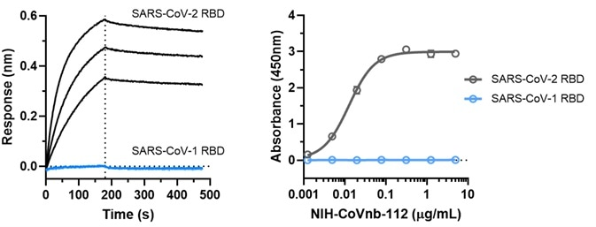 NIH-CoVnb-112 does not bind to SARS-CoV-1.