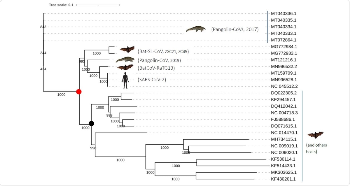 Phylogenetic tree of the closely related SARS-CoV-2 coronaviruses based on complete genomes